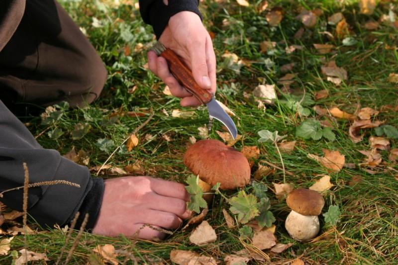 Поход за грибами: советы и предупреждения